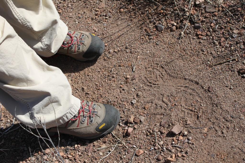 footprints in the desert - February 2010
