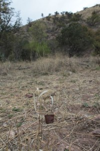 empty cans left on trails west of Nogales in southern Arizona