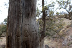 closeup of carving on a fencepost, part of the U.S.-Mexico border west of Nogales, Arizona